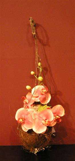 Hanging orchids inside a coconut. By Connie