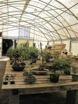 Bonsai tree nursery