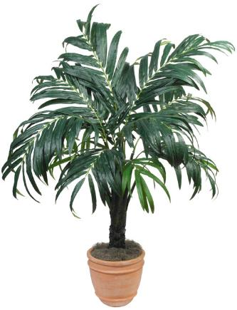 Kentia Palm 66 inch