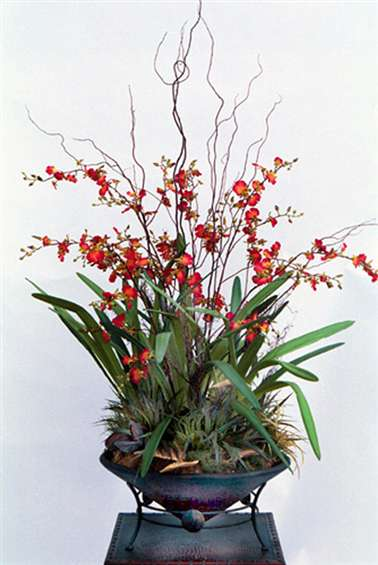 Dancing lady silk orchids in large metal container