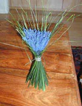 A bunch of French lavender