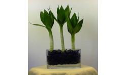 lotus bamboo 3 stalks arrangement