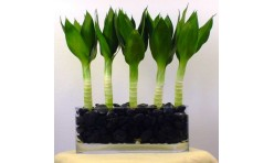 lotus bamboo 5 stalks arrangement