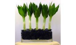 lotus bamboo 5 stalks arrangement