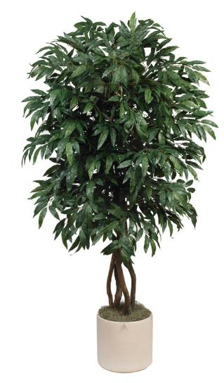 Mango Tree. 67 inch