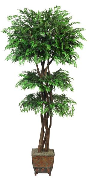 Tiered Ming Aralia Tree