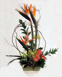 Tropical flower design