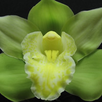 Cymbidium Missing Mervin
