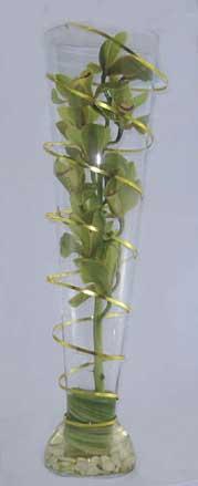 Modern flower arrangement. Cymbidium orchid stem, wire