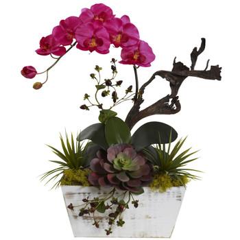 Orchid succulent garden