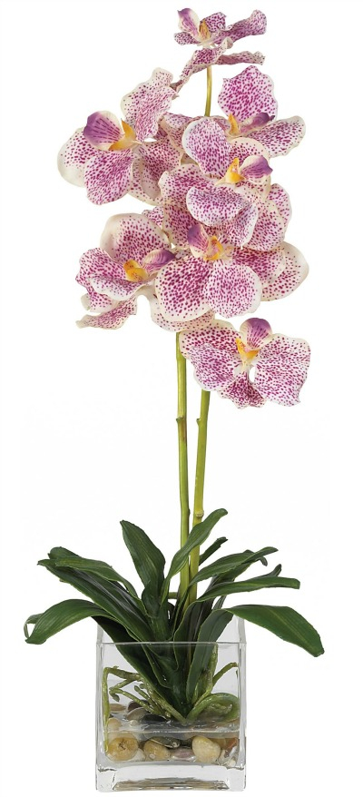 Silk Vanda Orchid. Variegated.