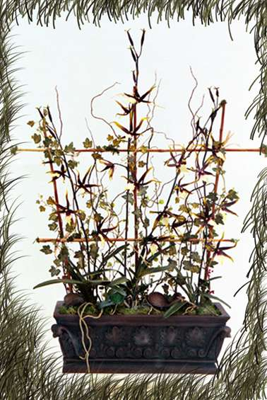 Spider Variegated Orchid trellis design, By Paolo Calvenzani