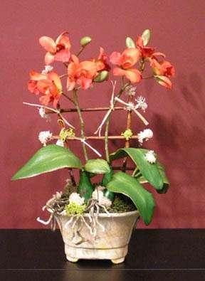 Orange orchids in Italian terracotta. By Paolo Calvenzani