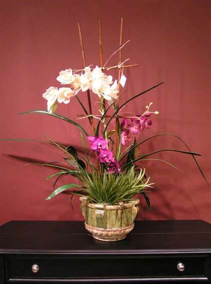 White and purple orchids in ceramic pot. By Paolo Calvenzani