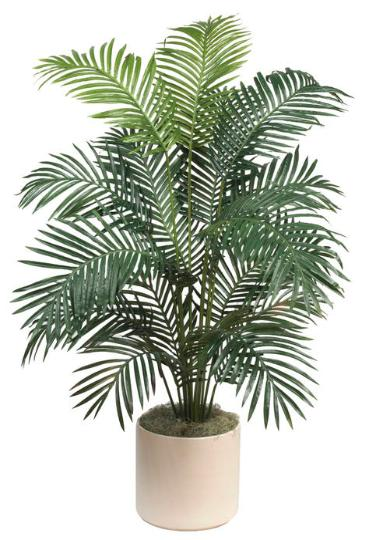 Paradise Palm 68 inch