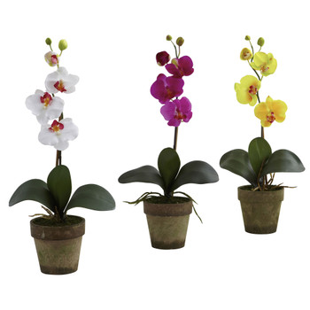 Potted Phalaenopsis Set-of-3