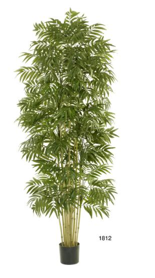 Phoeniox Palm Tree