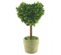 Preserved boxwood topiary mini hearts