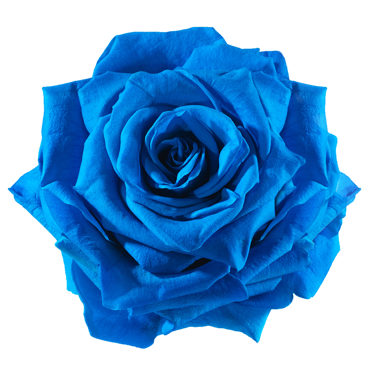 preserved rose blue electric
