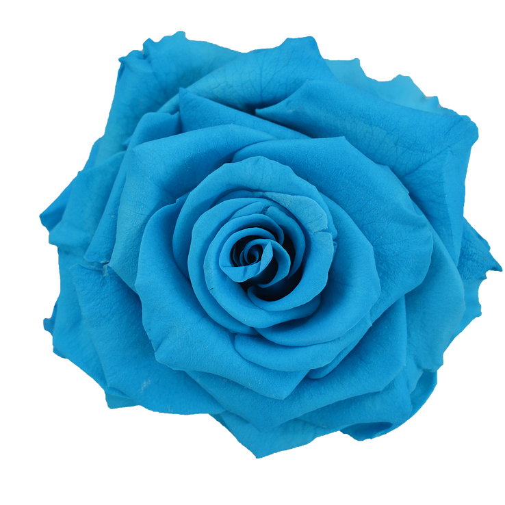 Preserved Rose Light Blue