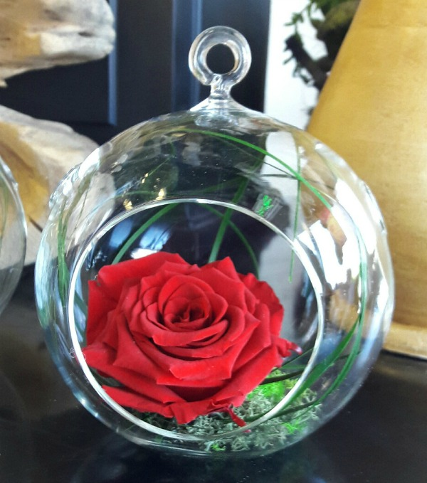 Glass terrarium with a preserved red rose