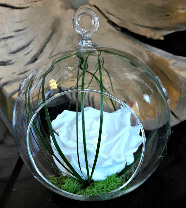 White preserved rose arrangement in glass terrarium