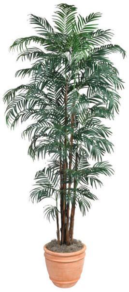 Robellini Palm 84 inch