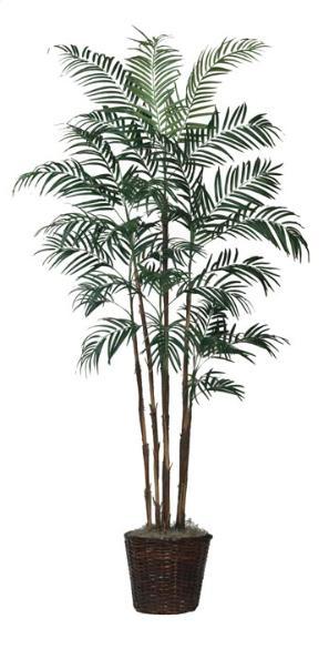 Robellini Palm 66 inch