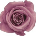 cherry blossom preserved rose