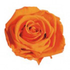 orange preserved rose