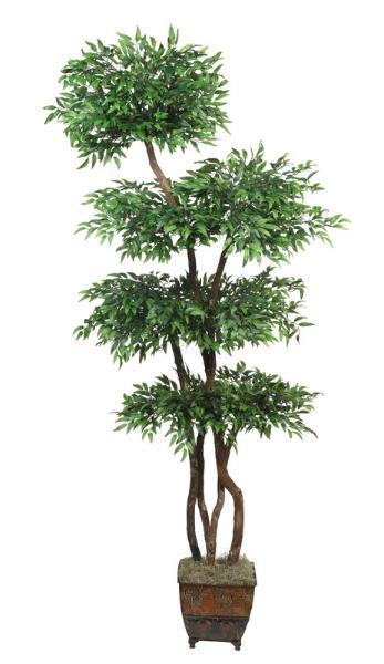 Ruscus Tree