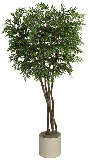 Ruscus tree with natural dragonwood trunks