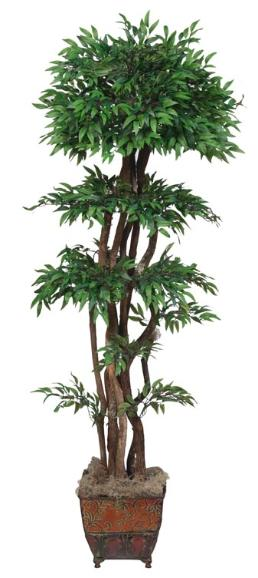 Ruscus Topiary with Natural Dragon wood Trunks