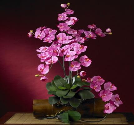 Phalaenopsis Silk Orchid  Dark Pink