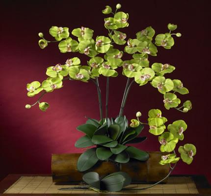 Phalaenopsis Silk Orchid Green