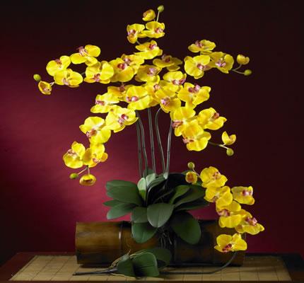Phalaenopsis Silk Orchid Yellow