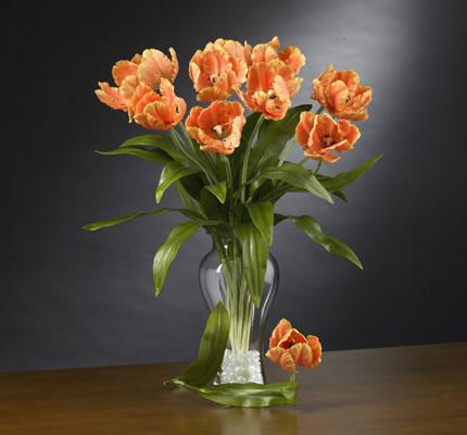 Parrot Tulips Stems Orange