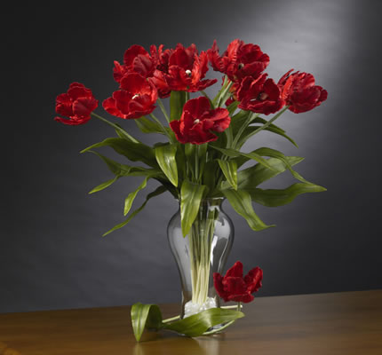 Parrot Tulips Stems Red