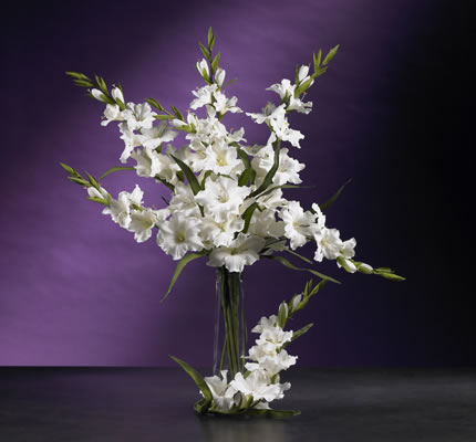 Gladiola Stem white