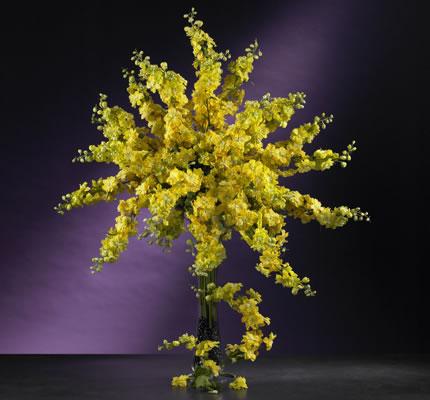 Delphinium Stem Yellow