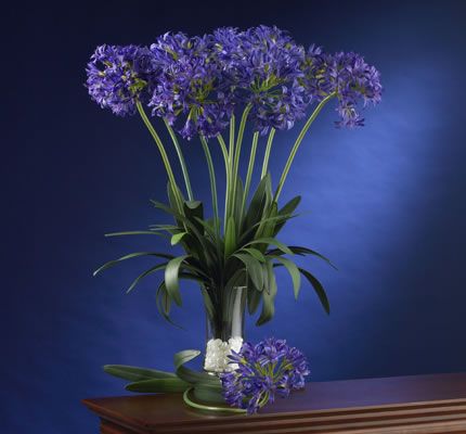 African Lily purple