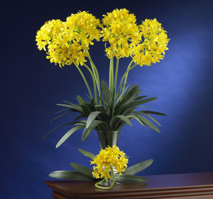 African Lily yellow