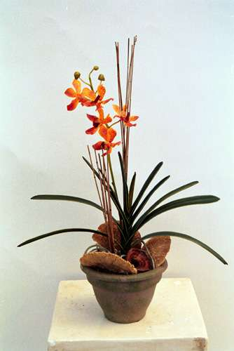 Orange orchid with mushrooms in terracotta container By Joy