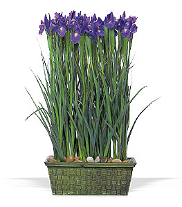 Parallel design. Iris flowers in basket.