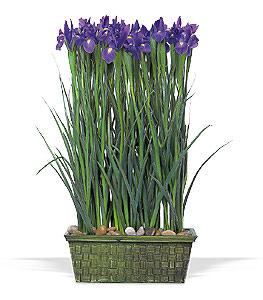 Parallel design. Iris flowers in basket.