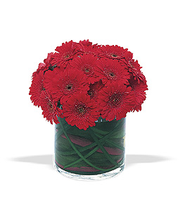 Flower deisgn with burgundy gerbera diasies in glass cube
