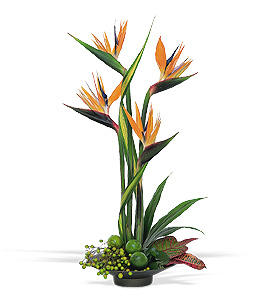Tropical flower design featuring birds of paradise. Zen