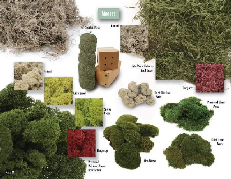 Tree Moss varieties