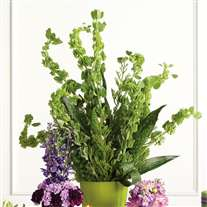 Wedding flower centerpiece. Tall Bells of Ireland. Green