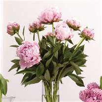 wedding flower peonies centerpiece